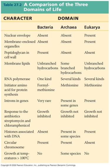 Bacterial morphology list