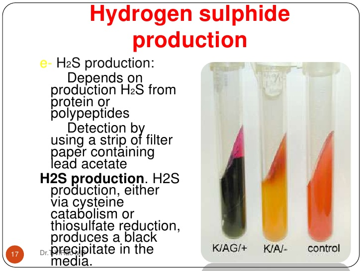 Hydrogen sulfide production